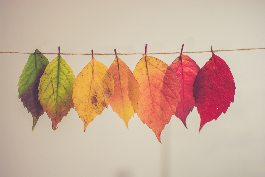 Multicolored fall leaves. Only Leaves should fall, not patients.